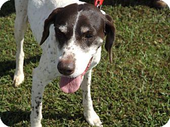 English Pointer Mix Dog for adoption in Thomaston, Georgia - Essey  Mae Jones
