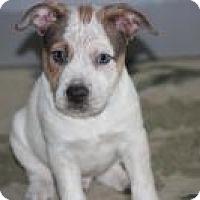 Adopt A Pet :: Baby Tanner - Marlton, NJ