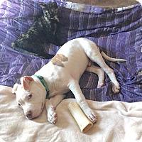 Adopt A Pet :: Royal - Reisterstown, MD