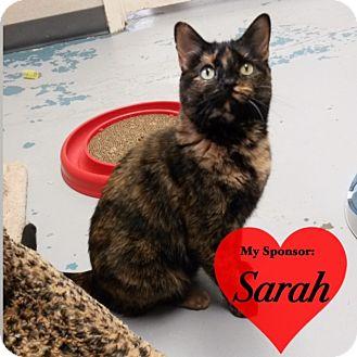Domestic Shorthair Cat for adoption in San Leon, Texas - Libby
