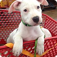 Adopt A Pet :: Bordentown, NJ - Eddard (Ned) - New Jersey, NJ
