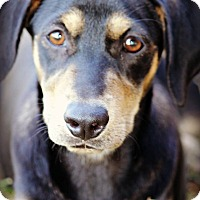 Adopt A Pet :: *Jade - PENDING - Westport, CT