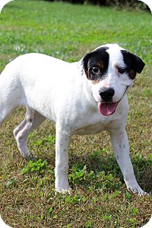 Pointer Mix Puppy for adoption in Waldorf, Maryland - Jewel