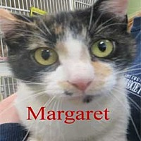 Adopt A Pet :: Margaret - Warren, PA