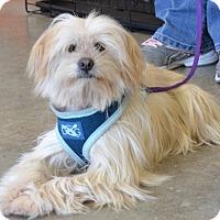 Adopt A Pet :: Trixie - Simi Valley, CA