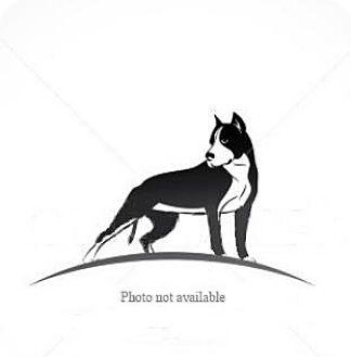 Pit Bull Terrier Dog for adoption in San Bernardino, California - URGENT ON 5/16  San Bernardino