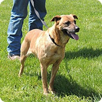 Adopt A Pet :: Mimosa - Sullivan, MO