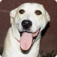 Adopt A Pet :: Wilemena - Oxford, MS