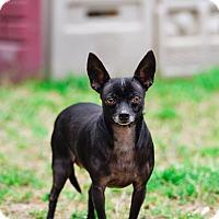 Adopt A Pet :: Pepper - Virginia Beach, VA