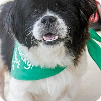 Adopt A Pet :: Bernie - Washington, DC