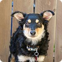 Adopt A Pet :: Lexi - Los Angeles, CA