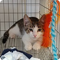 Adopt A Pet :: Hamilton - Umatilla, FL