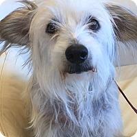 Adopt A Pet :: BECKETT - Palm Desert, CA