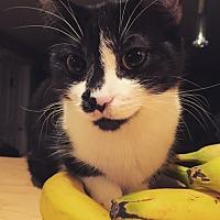 Adopt A Pet :: Ruth - Vancouver, BC