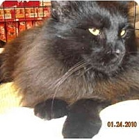 Adopt A Pet :: Thomas Black - Riverside, RI