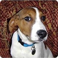 Adopt A Pet :: Charlie - Blairstown, NJ