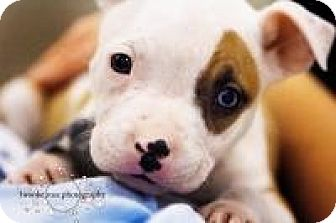 Terrier (Unknown Type, Medium) Mix Puppy for adoption in Minneapolis, Minnesota - Ruby