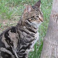 Adopt A Pet :: Bob - Zolfo Springs, FL
