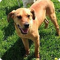 Adopt A Pet :: Faith - Morgantown, WV