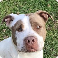Adopt A Pet :: Zeus! - Sacramento, CA