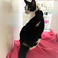 Adopt A Pet :: Barney - Tempe, AZ