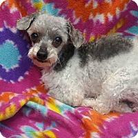 Adopt A Pet :: Bandit - Crump, TN