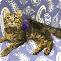 Adopt A Pet :: Freya - Lexington, NC
