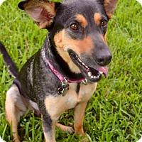 Adopt A Pet :: GABBY - Wilwaukee, WI