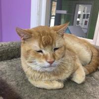Adopt A Pet :: Mars - Orleans, VT