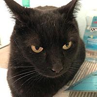 Adopt A Pet :: Button - Cambridge, MD