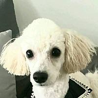 Adopt A Pet :: May - LONG ISLAND CITY, NY