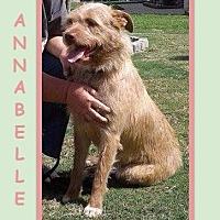 Adopt A Pet :: ANNABELLE - Dallas, NC
