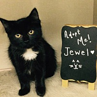 Adopt A Pet :: Jewel - Rochester, NY