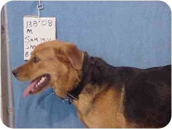 Shepherd (Unknown Type) Mix Dog for adoption in Zanesville, Ohio - Sammy/Adopted!