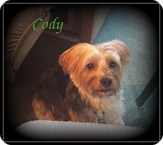 Yorkie, Yorkshire Terrier Dog for adoption in Denver, North Carolina - Cody