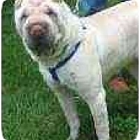 Adopt A Pet :: Sherman - Bethesda, MD