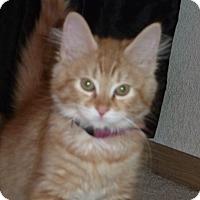 Adopt A Pet :: Gunther - Portland, OR