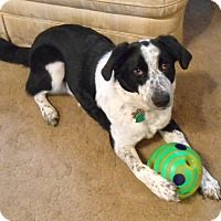 Adopt A Pet :: Buddy - New Update 1-26! - WAterford, WI