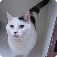 Adopt A Pet :: King - Merrifield, VA