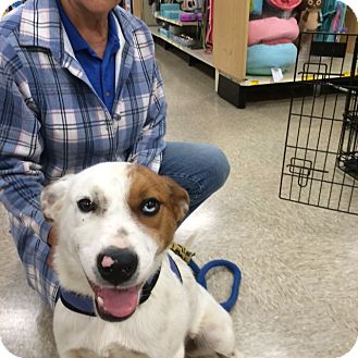 Cattle Dog Mix Dog for adoption in Hohenwald, Tennessee - Eclipse