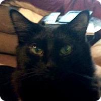 Adopt A Pet :: Om - Winchester, CA