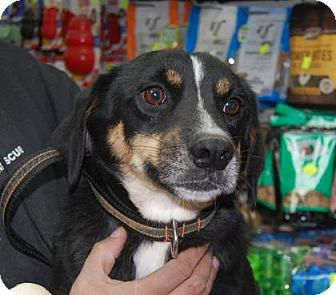 Hound (Unknown Type) Mix Dog for adoption in Brooklyn, New York - Jake