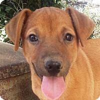Adopt A Pet :: Xavier AD 03-04-17 - Preston, CT