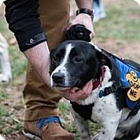 Adopt A Pet :: Jacob - Washington, DC