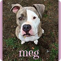 Adopt A Pet :: Meg - Port Jervis, NY