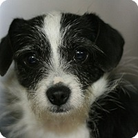 Adopt A Pet :: Maisy - Canoga Park, CA