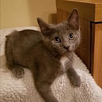 Adopt A Pet :: Marnie - Lenhartsville, PA