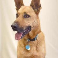 Adopt A Pet :: Charlie - Fort Dodge, IA