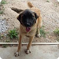 Adopt A Pet :: Princess - Londonderry, NH