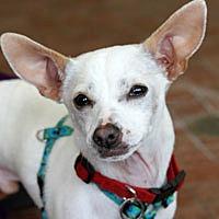 Adopt A Pet :: Mango - Pacific Grove, CA